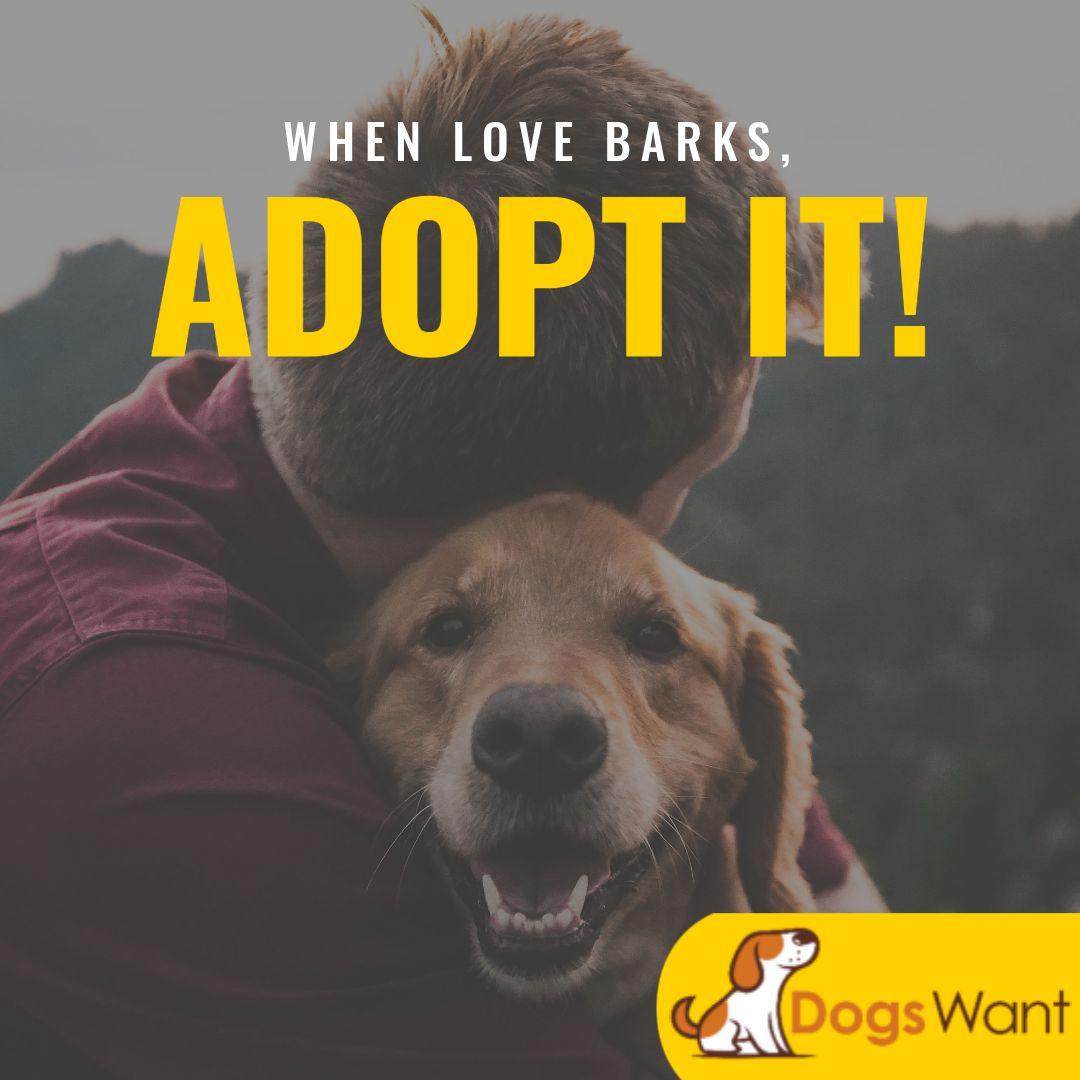 Pet Adoption Banner